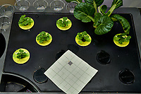 AeroGarden Farm 09-Right. Positions 01-02, 04-07 Bok Choi at day 7. Position 03 Bok Choi transfered from other Farm. Image taken with a Leica TL-2 camera and 35 mm f/1.4 lens (ISO 100, 35 mm, f/8, 1/30 sec).