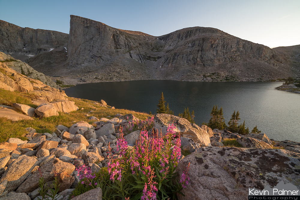 At nearly 2 miles above sea level in the Cloud Peak Wilderness, there is not much soil to be found, it is mostly rock. But the wildflowers grow wherever they can in between boulders.