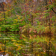 The fall colors are one of the great gifts of being close to nature.  They don't last long so get them when you can
