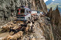 """This image of sheep and goats being herded over the Zojila Pass as a traffic jam idles trucks because of a landslide; Kashmir, Jammu and Kashmir State; India won the grand prize in the worldwide Photo District News """"World in Focus"""" Travel Photography Competition in November 2017 and the Photoshelter Travel Photography competition in 2015. The image was also a selected winner to appear in the American Photography 32 annual award book. It has been used by a variety of media around the world including GEO France and Red Bull."""