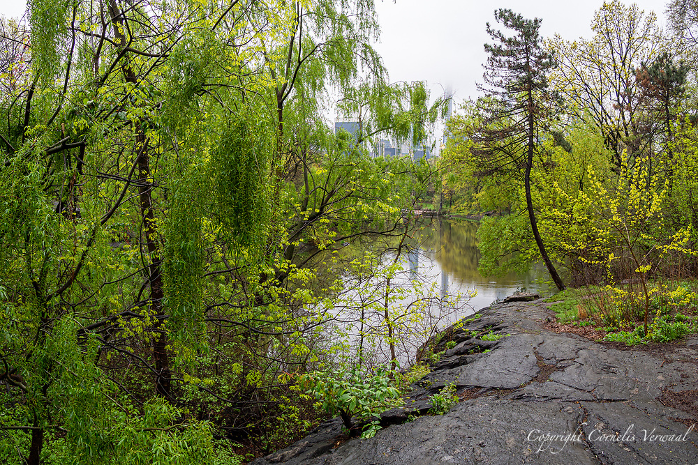 A rainy morning walk through The Ramble in Central Park, May 1, 2020.