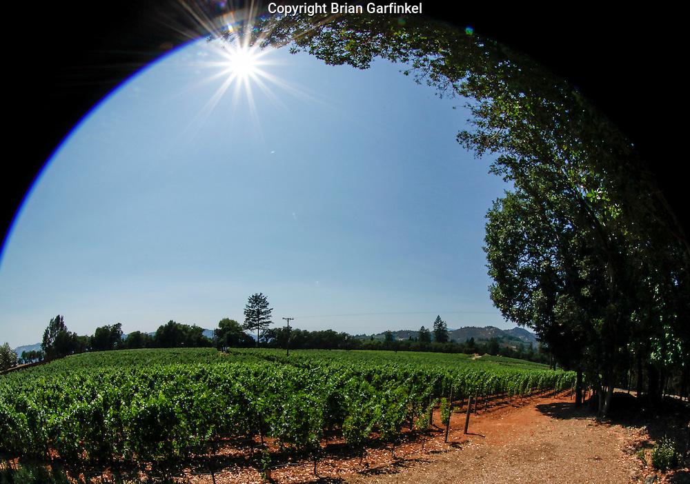 The Arkenstone Estate Vineyard on Saturday July 14th 2012 in Angwin, California. (Photo By Brian Garfinkel)