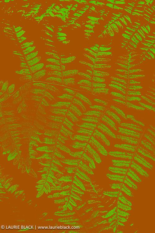 Abstract fern fine art photo