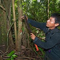Wilder, a Yanayacu Indian, cuts a branch with medicinal herbs.