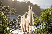 coromandel peninsula photos, coromandel photographer, whitianga photos, kuaotunu photos, matarangi photographer, travel photos coromandel, hahei photos, hotwater beach photos, cathedral cove photos