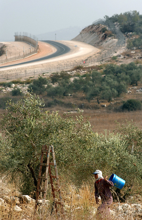 Maysoon, a member of the Toumeh family, walks through the field of Olive trees her family is harvesting in the northern West Bank town of Qaffin, Wednesday, November 5, 2003. A portion of the Israeli Security Fence, now made up of gates and barbed wire, can be seen behind Maysoon. Due to the placement of the fence, the Tomi family had to acquire a permit to get to this portion of their olive trees..Photo by Erin Lubin