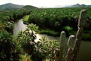 MEXICO, BAJA CALIFORNIA Mulege colonial town in palm groves