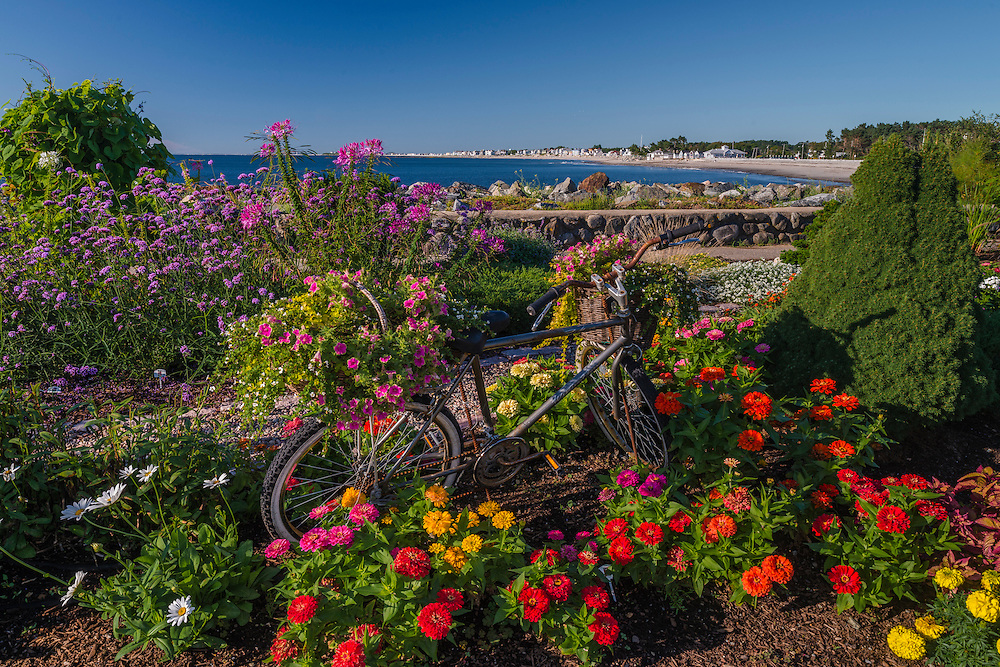 Bicycle as decoration for summer garden along coastline, Little Boars Head, North Hampton, NH