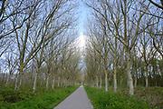 Texel is het grootste Nederlandse Waddeneiland. Het landschap op Texel is rijk en divers. Texel heeft behalve polders, brede zandstranden, duinen en graslanden ook heide, bos en kwelders. <br /> <br /> Texel is the biggest Dutch Wadden Island. The landscape on the island is rich and diverse. Texel has besides polders, wide sandy beaches, dunes and grasslands also heaths, woods and marshes.<br /> <br />  Joke , Dymen , Patrick , Jeanneke