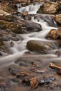 Amicalola Streamscape