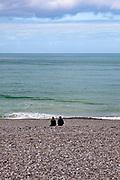 Couple sitting on a stony beach, Etretat, Normandy, France