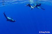 underwater videographer Rob Torelli films pygmy killer whale, Feresa attenuata, while son Jake Torelli watches, Kona, Hawaii, USA ( Central Pacific Ocean ) MR 333-334