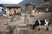 The Namgay family's 3-legged cow by their 3-story rammed-earth home. (Supporting image from the project Hungry Planet: What the World Eats.) The Namgay family living in the remote mountain village of Shingkhey, Bhutan, is one of the thirty families featured, with a weeks' worth of food, in the book Hungry Planet: What the World Eats.