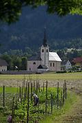 A rural Slovenian church and a local woman tending crops, on 18th June 2018, in Bohinjska Bela, Bled, Slovenia.