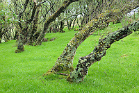 Birch forest on the Isle of Skye Scotland