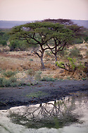 An African Acacia tree reflects in the water below on the Madikwe Game Reserve, South Africa.