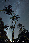 stars and planets fill the night sky above tall coconut palms at Puako, South Kohala, Hawaii Island ( the Big Island ), Hawaii, U.S.A. ( Central Pacific Ocean )