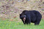 Manning Provincial Park Photos