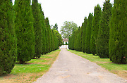 The road leading up to Chateau Trotanoy lined with cedar trees and the chateau in the distance Pomerol Bordeaux Gironde Aquitaine France