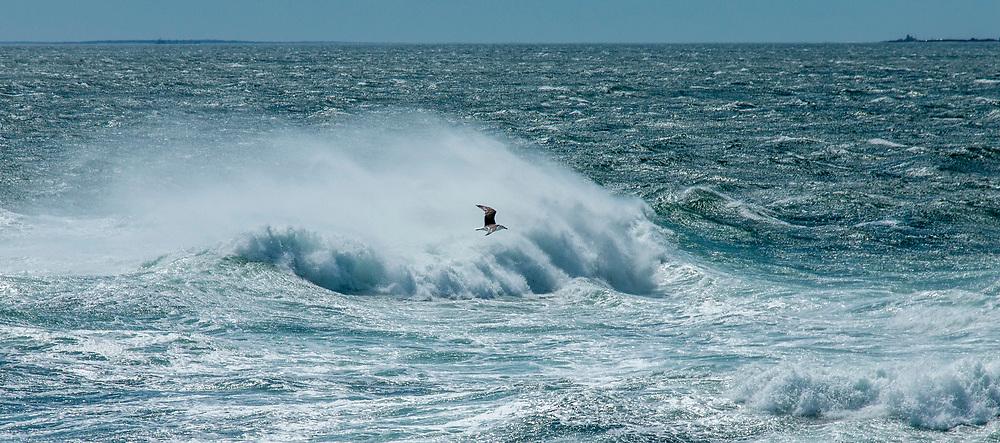 Jamestown RI<br /> Beavertail Waves