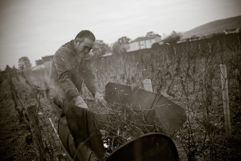 Burning vines,  Burgundy, France. November 29, 2013. Photograph ©2013 Darren Carroll