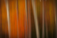 Abstract, blurry color, Acadia National Park, Maine, USA