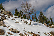 Snowscape on the hermon Mountain, Israel