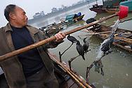 Fishermen fishing in an ancient way with help of domesticated cormorants (Phalacrocorax carbo sinensis), Poyang Ho Lake, Jiangxi province, China