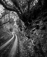 Sussex Ways