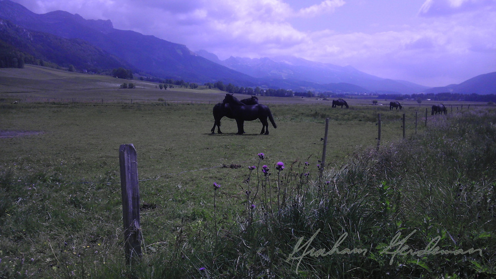 Horses in the Vercors region of France
