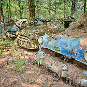 A row of classic old cars slowly rusting in the forest portion of the Old Car City junkyard in Georgia.
