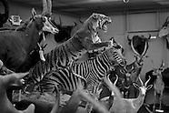 Natural History Collection at Florida Gift Shot
