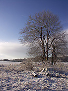 East Anglian winter landscape snow country scene with trees and blue sky,  Butley, Suffolk, England, UK February 2005