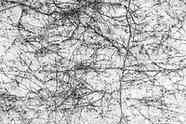 Monochrome Pollock