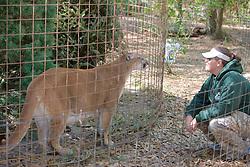 Big Cat Rescue Staff & Cougar