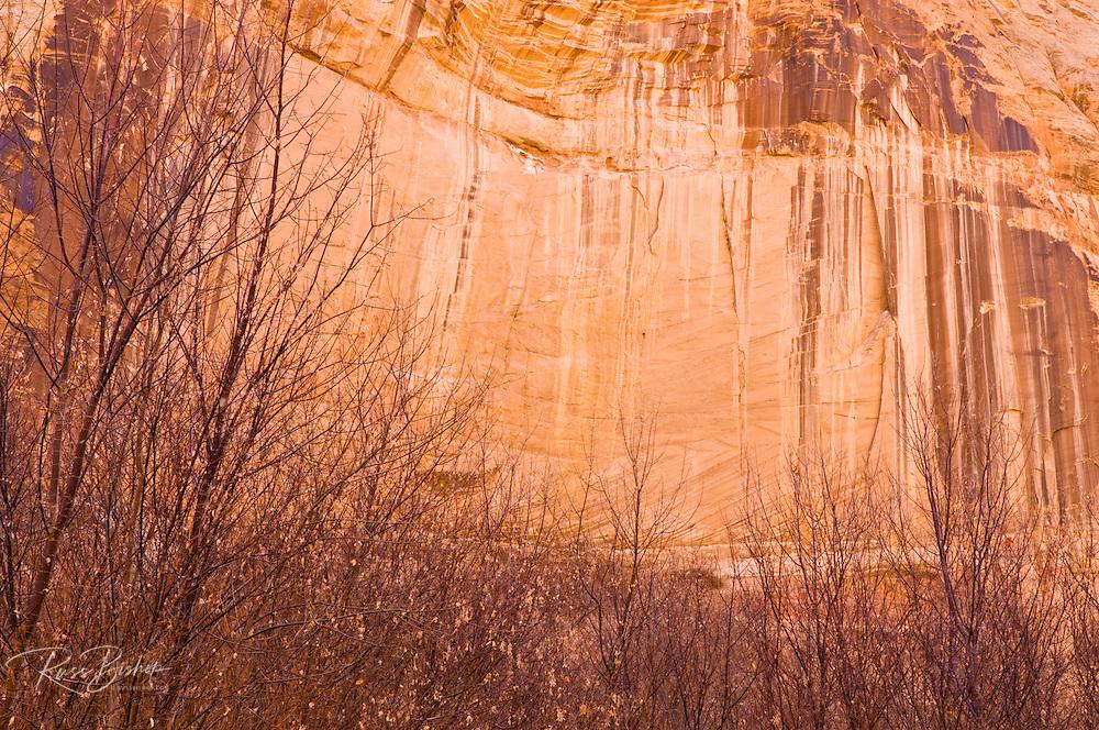 Desert varnish on canyon wall along Calf Creek, Grand Staircase-Escalante National Monument, Utah