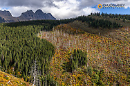 Hillside of autumn hues below the Garden Wall in Glacier National Park, Montana, USA