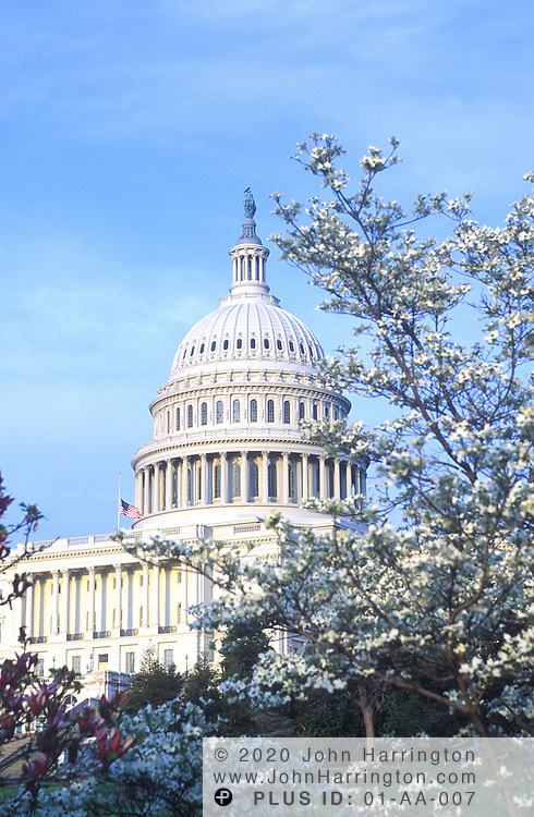 The Capitol Building seen from a distance with blooming trees