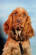 Fräulein Hund (6 Monate).Heike Teepe