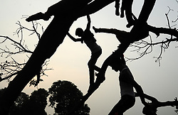 August 8, 2017 - Allahabad, Uttar Pradesh, India - In silhouette Indian children climb on branches of a fallen tree on the outskirts of Allahabad.  (Credit Image: © Prabhat Kumar Verma via ZUMA Wire)