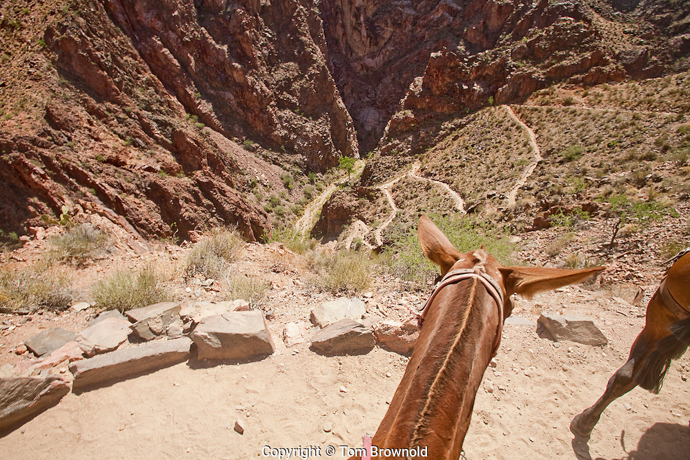 """The Bright Angel trail view where it drops into Pipe Creek down the switch backs known as the """"Furnance""""."""