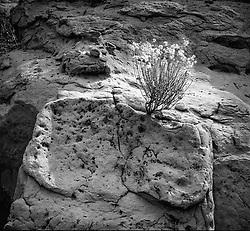 Cholla on Rock. Canyonlands national Park, Utah
