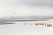 whaler's bay, Deception Island, the South Shetland Islands archipelago, with one of the safest harbours in Antarctica. Tourists in yellow coats explore the island and wildlife
