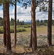 Indian Ford Meadow near Sisters, part of the Deschutes Land Trust properties.