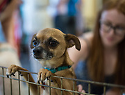 A rescued pup peers over his enclosure at the Adoption Fair.