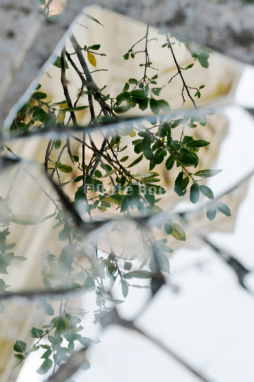 broken mirror with building and nature leaves reflecting