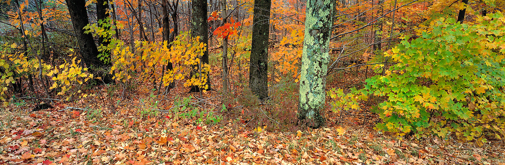 Autumn comes early in the Catskill Mountains in New York.