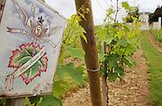 Vines. Clos de l'Echo. Cabernet Franc. Domaine Couly Dutheil, Chinon, Loire, France