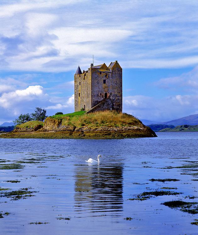 A lone swan swims near Stalker Castle in Loch Linnhe, NW Highlands in Scotland.
