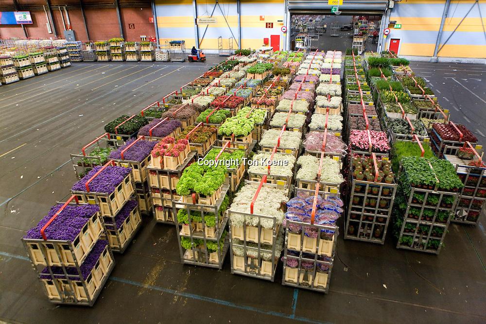 Flower auction in Aalsmeer, Holland